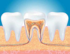 Endodonzia - Studio Dentistico Dottor Barbato - Dentista a Fano